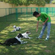 http://www.buddydog.net/wp-content/uploads/2013/05/Aiko-4-wpcf_190x190.jpg