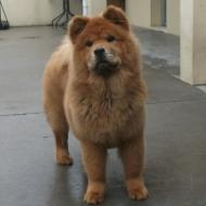 http://www.buddydog.net/wp-content/uploads/2013/05/Baozi-1-wpcf_190x190.jpg