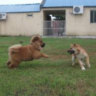 http://www.buddydog.net/wp-content/uploads/2013/05/Baozi-2-wpcf_190x190.jpg