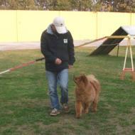 http://www.buddydog.net/wp-content/uploads/2013/05/Baozi-3-wpcf_190x190.jpg