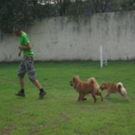 http://www.buddydog.net/wp-content/uploads/2013/05/Baozi-4-wpcf_190x190.jpg