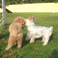 http://www.buddydog.net/wp-content/uploads/2013/05/Bella-2-wpcf_190x190.jpg