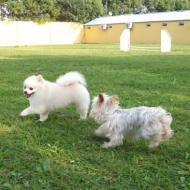 http://www.buddydog.net/wp-content/uploads/2013/05/Bella-3-wpcf_190x190.jpg