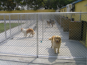 BuddyDog Big Kennel