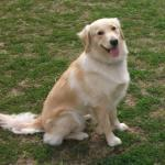 http://www.buddydog.net/wp-content/uploads/2013/05/Daisy-1-wpcf_150x150.jpg