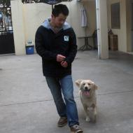http://www.buddydog.net/wp-content/uploads/2013/05/Daisy-2-wpcf_190x190.jpg