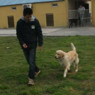 http://www.buddydog.net/wp-content/uploads/2013/05/Daisy-3-wpcf_190x190.jpg