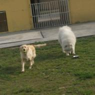 http://www.buddydog.net/wp-content/uploads/2013/05/Daisy-4-wpcf_190x190.jpg
