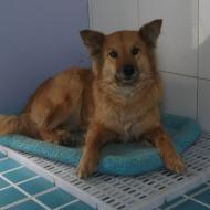 http://www.buddydog.net/wp-content/uploads/2013/05/Ginger-1-wpcf_190x190.jpg