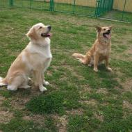 http://www.buddydog.net/wp-content/uploads/2013/05/Ginger-2-wpcf_190x190.jpg