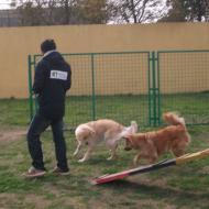http://www.buddydog.net/wp-content/uploads/2013/05/Ginger-3-wpcf_190x190.jpg