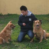 http://www.buddydog.net/wp-content/uploads/2013/05/Ginger-4-wpcf_190x190.jpg