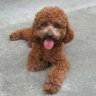 http://www.buddydog.net/wp-content/uploads/2013/05/Hershey-1-wpcf_190x190.jpg