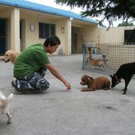 http://www.buddydog.net/wp-content/uploads/2013/05/Hershey-42-wpcf_190x190.jpg