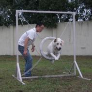 http://www.buddydog.net/wp-content/uploads/2013/05/Homer-2-wpcf_190x190.jpg