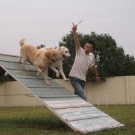 http://www.buddydog.net/wp-content/uploads/2013/05/Homer-4-wpcf_190x190.jpg