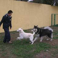 http://www.buddydog.net/wp-content/uploads/2013/05/Millie-2-wpcf_190x190.jpg