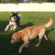 http://www.buddydog.net/wp-content/uploads/2013/05/Millie-3-wpcf_190x190.jpg