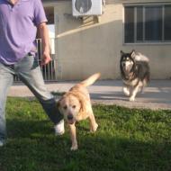 http://www.buddydog.net/wp-content/uploads/2013/05/Millie-4-wpcf_190x190.jpg