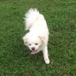 http://www.buddydog.net/wp-content/uploads/2013/05/Milo-1-wpcf_150x150.jpg