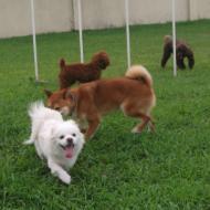 http://www.buddydog.net/wp-content/uploads/2013/05/Milo-2-wpcf_190x190.jpg