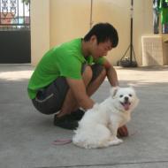 http://www.buddydog.net/wp-content/uploads/2013/05/Milo-3-wpcf_190x190.jpg