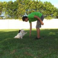 http://www.buddydog.net/wp-content/uploads/2013/05/Milo-4-wpcf_190x190.jpg