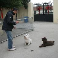 http://www.buddydog.net/wp-content/uploads/2013/05/Rusty-3-wpcf_190x190.jpg