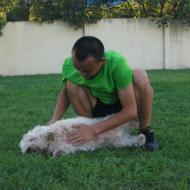 http://www.buddydog.net/wp-content/uploads/2013/05/Rusty-42-wpcf_190x190.jpg