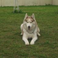 http://www.buddydog.net/wp-content/uploads/2013/05/Zoe-1-wpcf_190x190.jpg