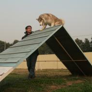 http://www.buddydog.net/wp-content/uploads/2013/05/Zoe-3-wpcf_190x190.jpg