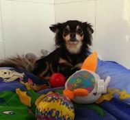 http://www.buddydog.net/wp-content/uploads/Abby-1-wpcf_190x175.jpg
