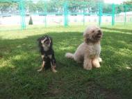 http://www.buddydog.net/wp-content/uploads/Abby-2-wpcf_190x143.jpg
