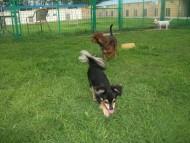 http://www.buddydog.net/wp-content/uploads/Abby-4-wpcf_190x143.jpg