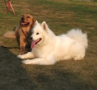 http://www.buddydog.net/wp-content/uploads/Camelot-1-wpcf_190x177.jpg