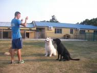 http://www.buddydog.net/wp-content/uploads/Camelot-2-wpcf_190x143.jpg