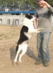 http://www.buddydog.net/wp-content/uploads/Dot-1-wpcf_108x150.jpg