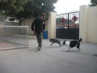 http://www.buddydog.net/wp-content/uploads/Dot-2-wpcf_190x143.jpg