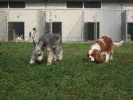 http://www.buddydog.net/wp-content/uploads/Genki-3--wpcf_190x143.jpg