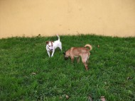 http://www.buddydog.net/wp-content/uploads/Gusto-3-wpcf_190x143.jpg