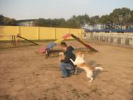 http://www.buddydog.net/wp-content/uploads/Maya-2-wpcf_190x143.jpg