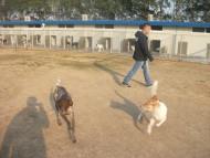http://www.buddydog.net/wp-content/uploads/Maya-3-wpcf_190x143.jpg
