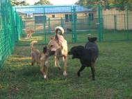 http://www.buddydog.net/wp-content/uploads/Mutley-2--wpcf_190x143.jpg