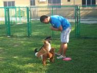 http://www.buddydog.net/wp-content/uploads/Pituca-4-wpcf_190x143.jpg