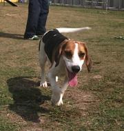 http://www.buddydog.net/wp-content/uploads/Rodney-1-wpcf_180x190.jpg