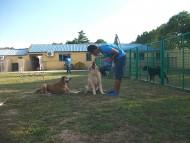 http://www.buddydog.net/wp-content/uploads/Rosebud-2-copy-wpcf_190x143.jpg