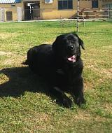 http://www.buddydog.net/wp-content/uploads/Sema-1-copy-wpcf_160x190.jpg