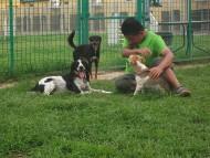 http://www.buddydog.net/wp-content/uploads/Snoet-3-5-wpcf_190x143.jpg