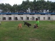 http://www.buddydog.net/wp-content/uploads/Yogi-2--wpcf_190x143.jpg