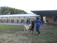 http://www.buddydog.net/wp-content/uploads/Yogi-3-wpcf_190x143.jpg